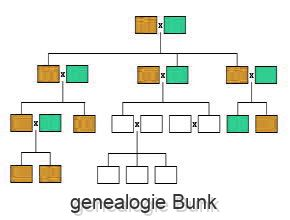 genealogie Bunk