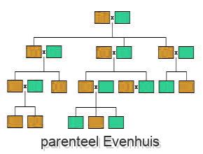 parenteel Evenhuis