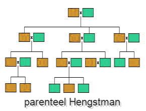 parenteel Hengstman