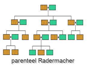 parenteel Radermacher