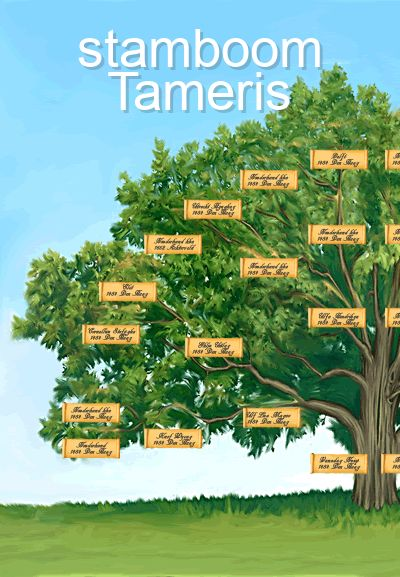 stamboom Tameris