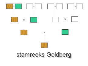 stamreeks Goldberg